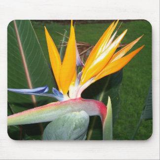 Hawaiin Flower Mouse Pad