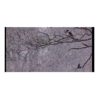 Hawk and king Fisher Card