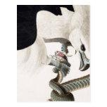 Hawk and Snake Illustration Post Cards