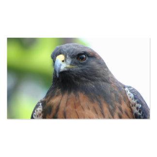 Hawk business cards