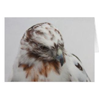 Hawk Card