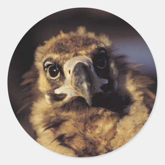 Hawk Close-Up Classic Round Sticker