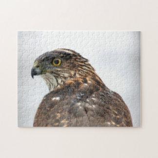 Hawk close up photo jigsaw puzzle