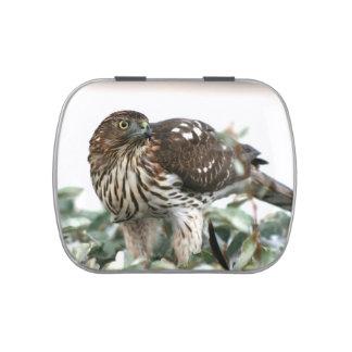 hawk el pájaro de vista lateral de la foto del latas de caramelos