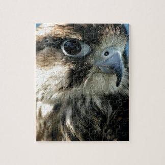 Hawk Eye Jigsaw Puzzle