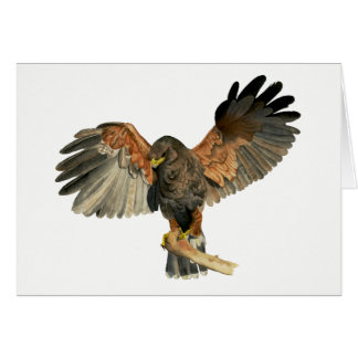 Hawk Flapping Wings Watercolor Painting Card