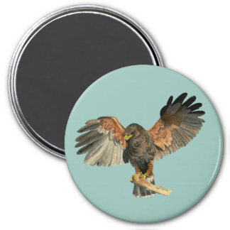 Hawk Flapping Wings Watercolor Painting Magnet