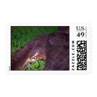 Hawk focused in flight--closeup stamp