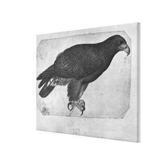 Hawk, from the The Vallardi Album Canvas Print