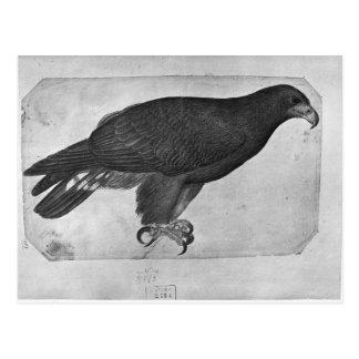 Hawk, from the The Vallardi Album Postcard