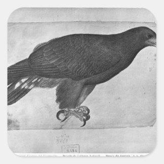 Hawk, from the The Vallardi Album Square Sticker