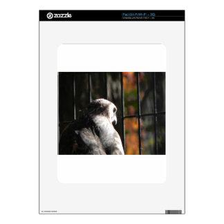 Hawk in a bird sanctuary decal for iPad