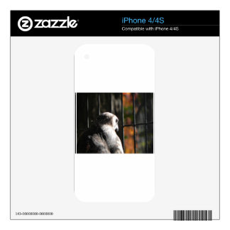 Hawk in a bird sanctuary skin for iPhone 4
