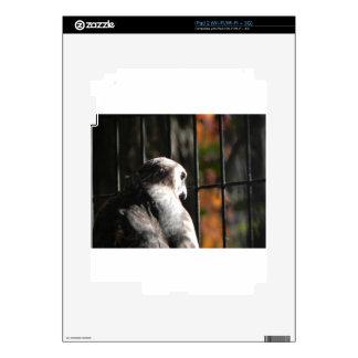 Hawk in a bird sanctuary skins for iPad 2