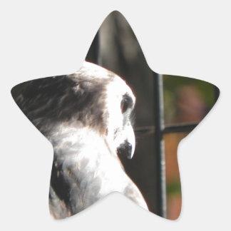 Hawk in a bird sanctuary star sticker