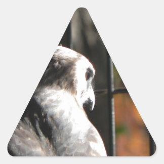 Hawk in a bird sanctuary triangle sticker