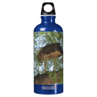 Hawk in a Tree Bottle