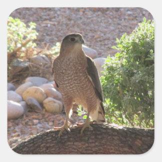 Hawk in a Tree Square Sticker