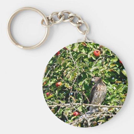 Hawk In Apple Tree Photo Basic Round Button Keychain