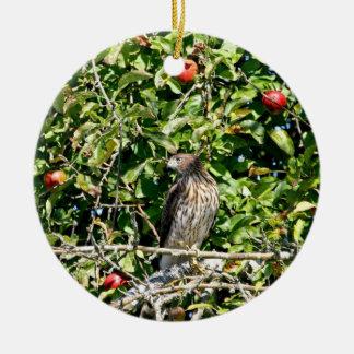 Hawk In Apple Tree Photo Ornaments