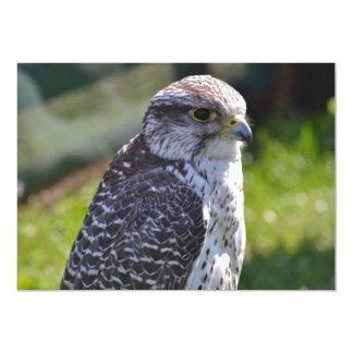Hawk Invitation
