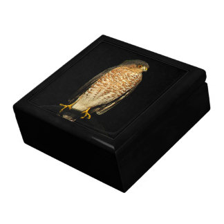 Hawk Jewelry Box