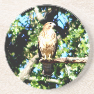 Hawk on a limb drink coaster
