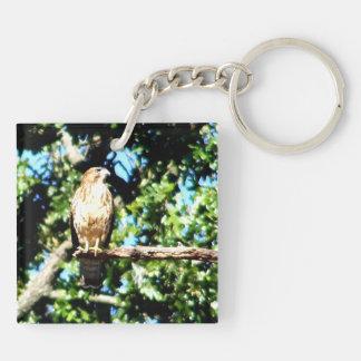 Hawk On a Limb Keychain