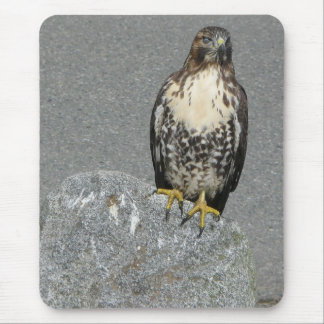 Hawk on a Rock Mouse Pad