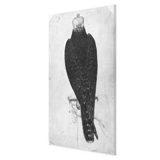 Hawk on hand canvas print