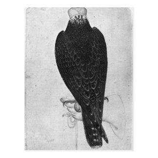 Hawk on hand postcard