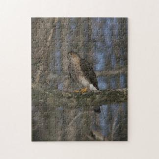Hawk Photo Puzzle.