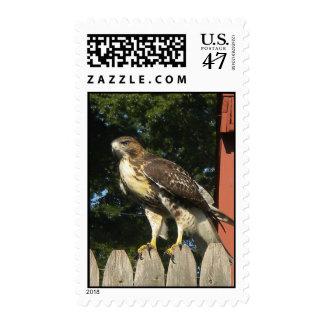 Hawk Postage