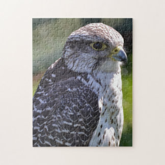 Hawk Puzzle/Jigsaw