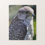 Hawk Puzzle/Jigsaw Jigsaw Puzzles