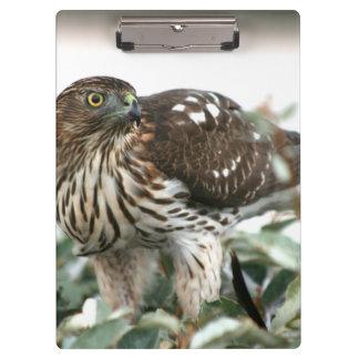 hawk side view bird of prey animal photo clipboards