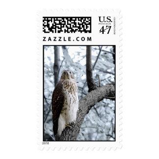 Hawk Sighting II Postage