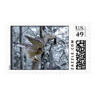 Hawk Sighting III Stamps