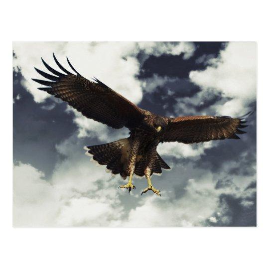 Hawk stooping postcard