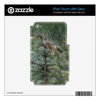 Hawk Take Off Decals For iPod Touch 4G