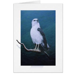 Hawk-White-necked Hawk Greeting Card