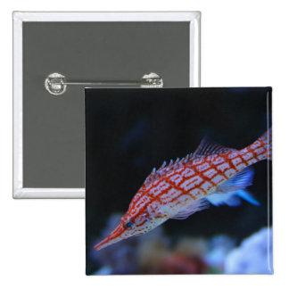 Hawkfish de pico largo rojo pin cuadrado