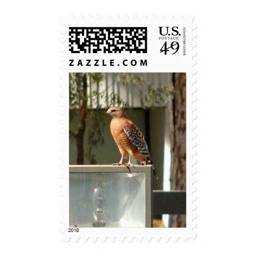 Hawks Birds Stamp