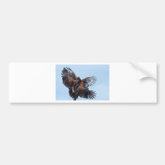 Hawks Fight for Control of the Sky Bumper Stickers