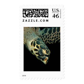 Hawksbill Angel Stamps