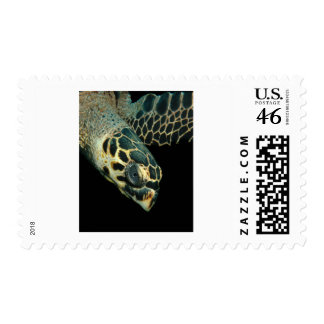 Hawksbill Angel Postage Stamps