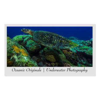 Hawksbill Sea Turtle Business Card Template