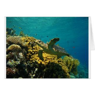 Hawksbill Sea Turtle Card