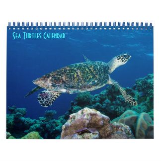 Hawksbill Sea Turtle Great Barrier Reef Coral Sea Calendar