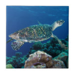 "Hawksbill Sea Turtle Great Barrier Reef Coral Sea Ceramic Tile<br><div class=""desc"">This beautiful tile features the critically endangered Hawksbill Sea Turtle,  distinguished from other sea turtles by its sharp,  curving beak,  swimming in the blue waters of the Coral Sea on Australia&#39;s Great Barrier Reef.</div>"